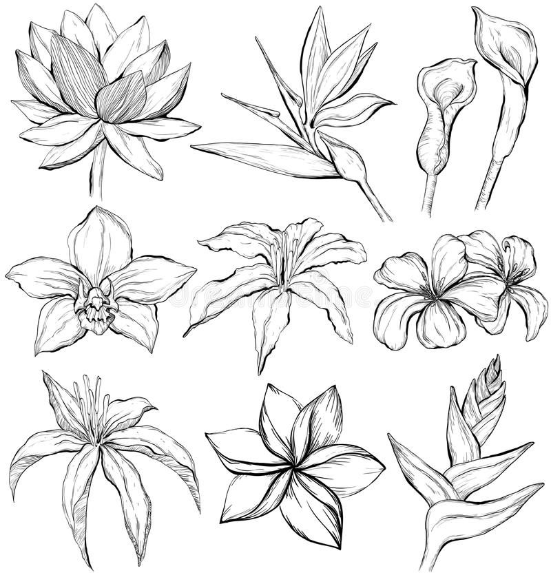 Illustration About Tropical Flowers Sketch Style Vector Illustration Water Lily Orchid Clematis P Tropical Flower Tattoos Flower Sketches Flower Drawing