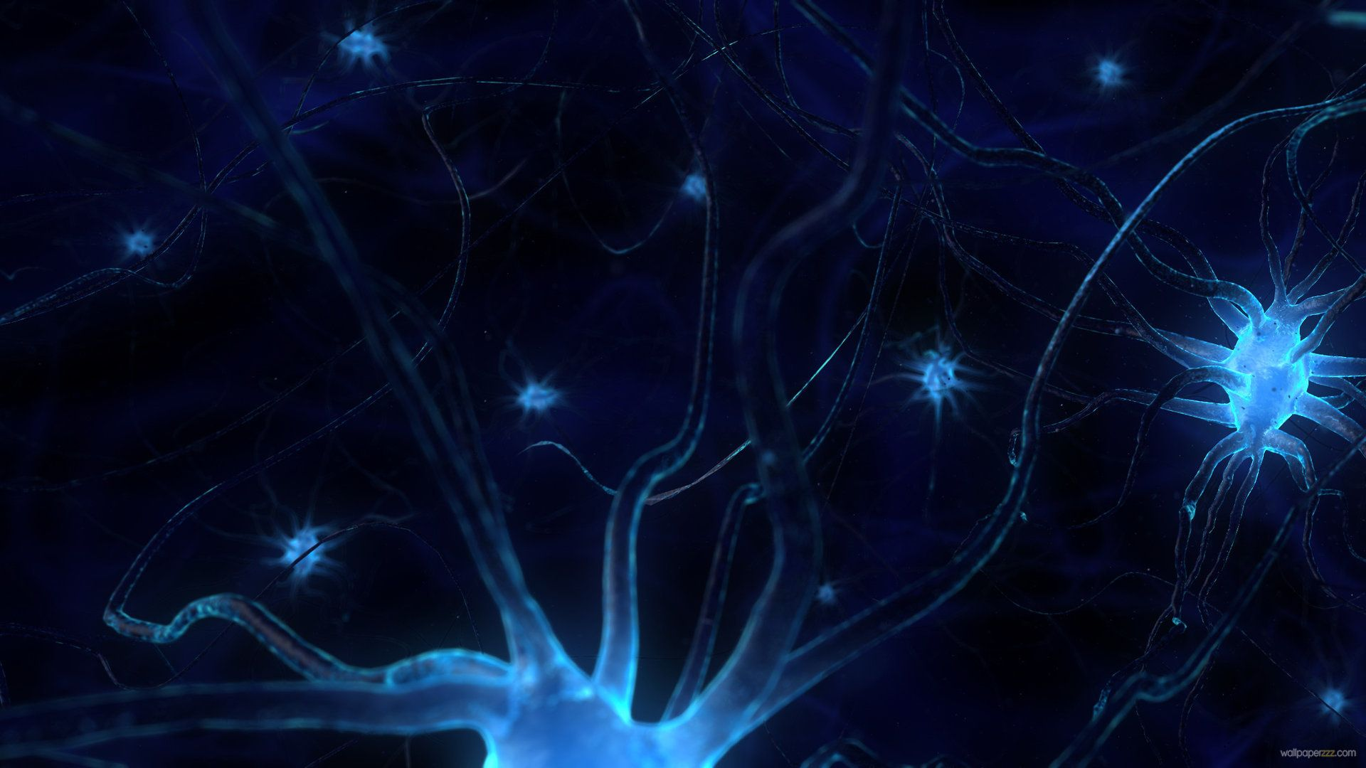 neurons in the brain wallpaper google search stem