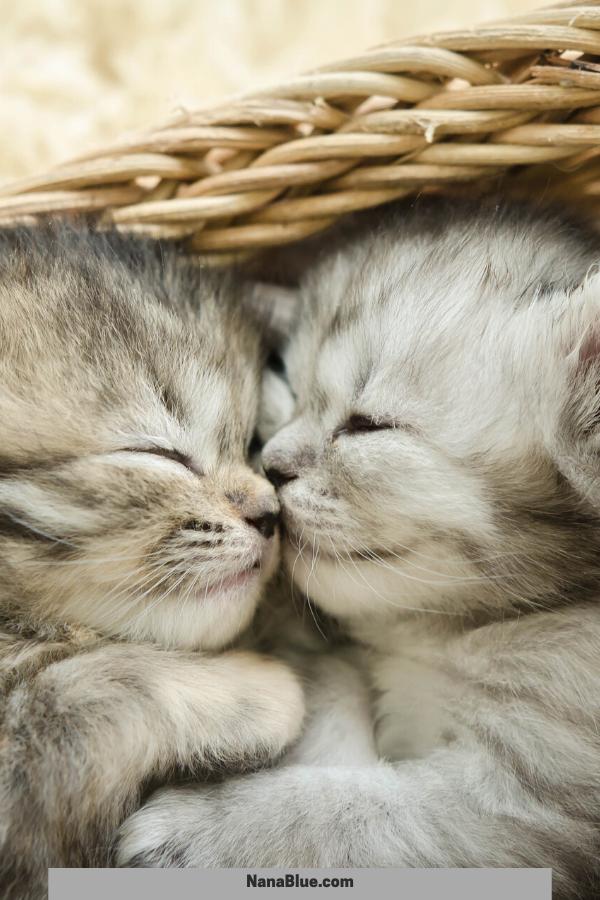 33 Kittens To Empower Your Day Sleeping Kitten Kittens Cutest Tabby Kitten