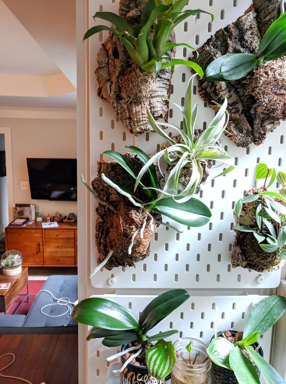 A Small Shared Condo Features Smart Storage Solutions And Over 50 Different Houseplants Apartment Therapy Garden
