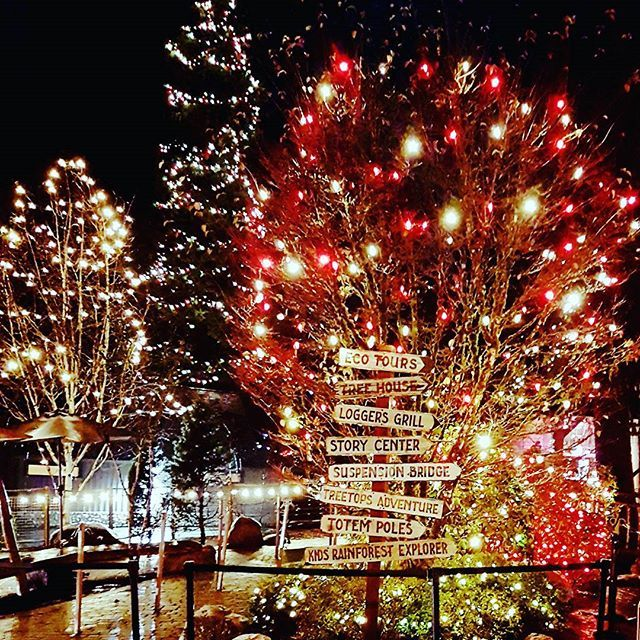 Christmas Light Show In Vancouver Christmas Lights Christmas Light Show Outdoor Christmas Lights