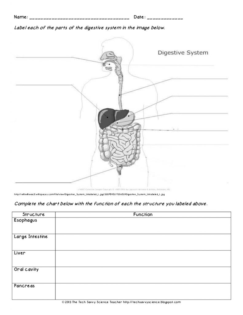 Digestive System Diagram Worksheet Versaldobip With Images