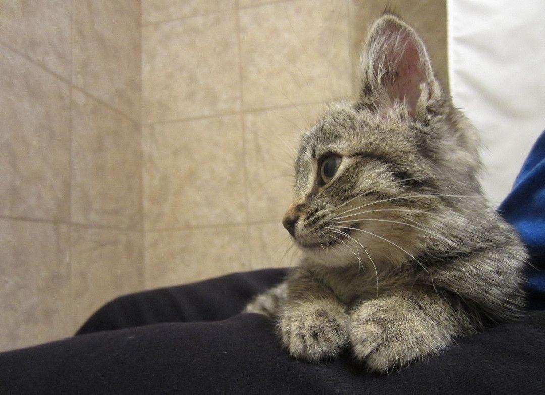 Rescue Kitten Week 2 ? Much Happier Meow cute cat Baby