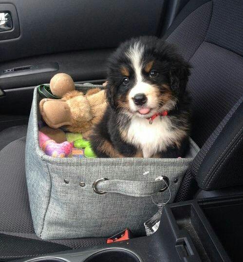 Imagen de dog, puppy, and animal