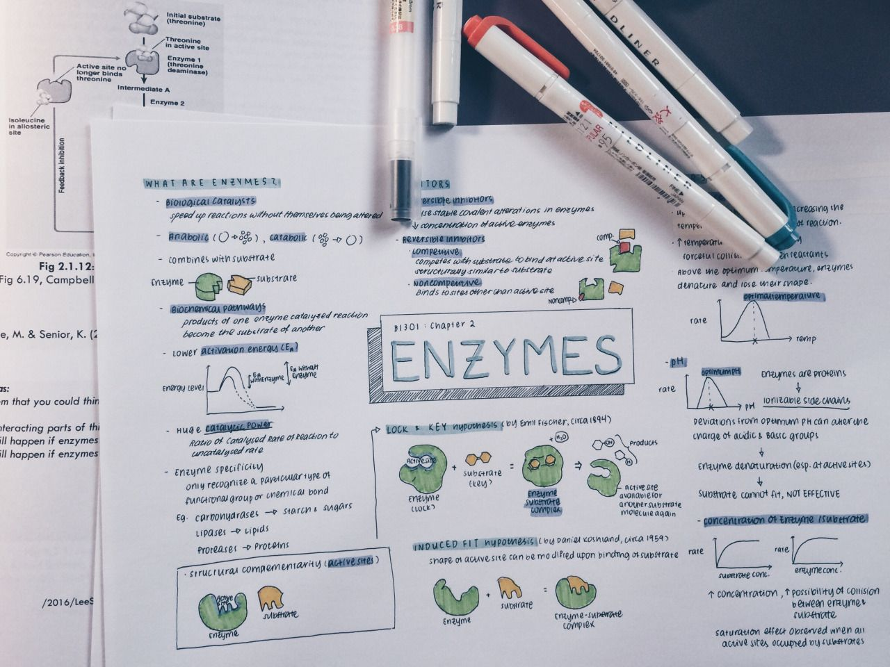 Enzymes - GCSE Biology Revision - xtremepapers.xyz