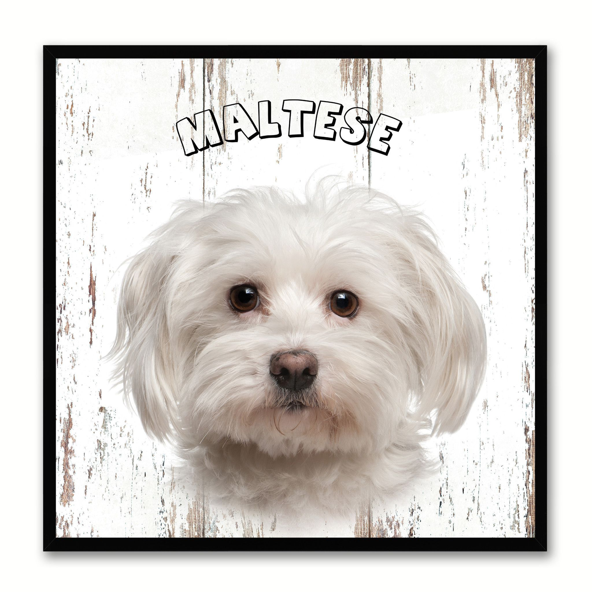 Maltese dog canvas print picture frame gift home decor wall art maltese dog canvas print picture frame gift home decor wall art decoration jeuxipadfo Images