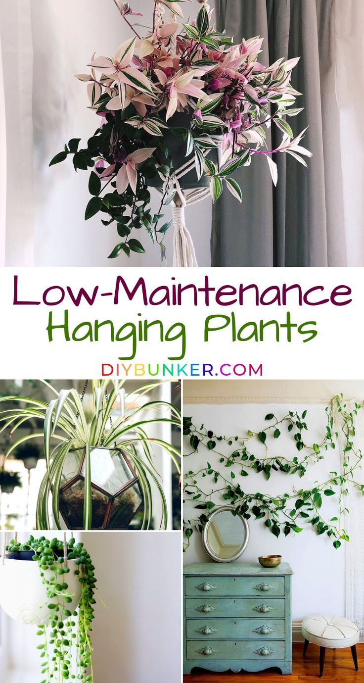 Hanging Plants That're Low-Maintenance for Beginner Gardeners #plantsindoor