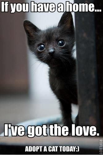 Cats are the #1 animal that is killed in shelters. please adopt a cat or kitten and safe it's life.