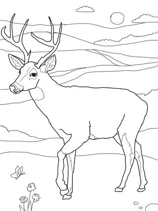 White Tailed Deer Coloring Page Deer Coloring Pages Animal