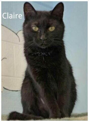 Adopt Claire On Petfinder Saving Cat Cat Adoption Animals