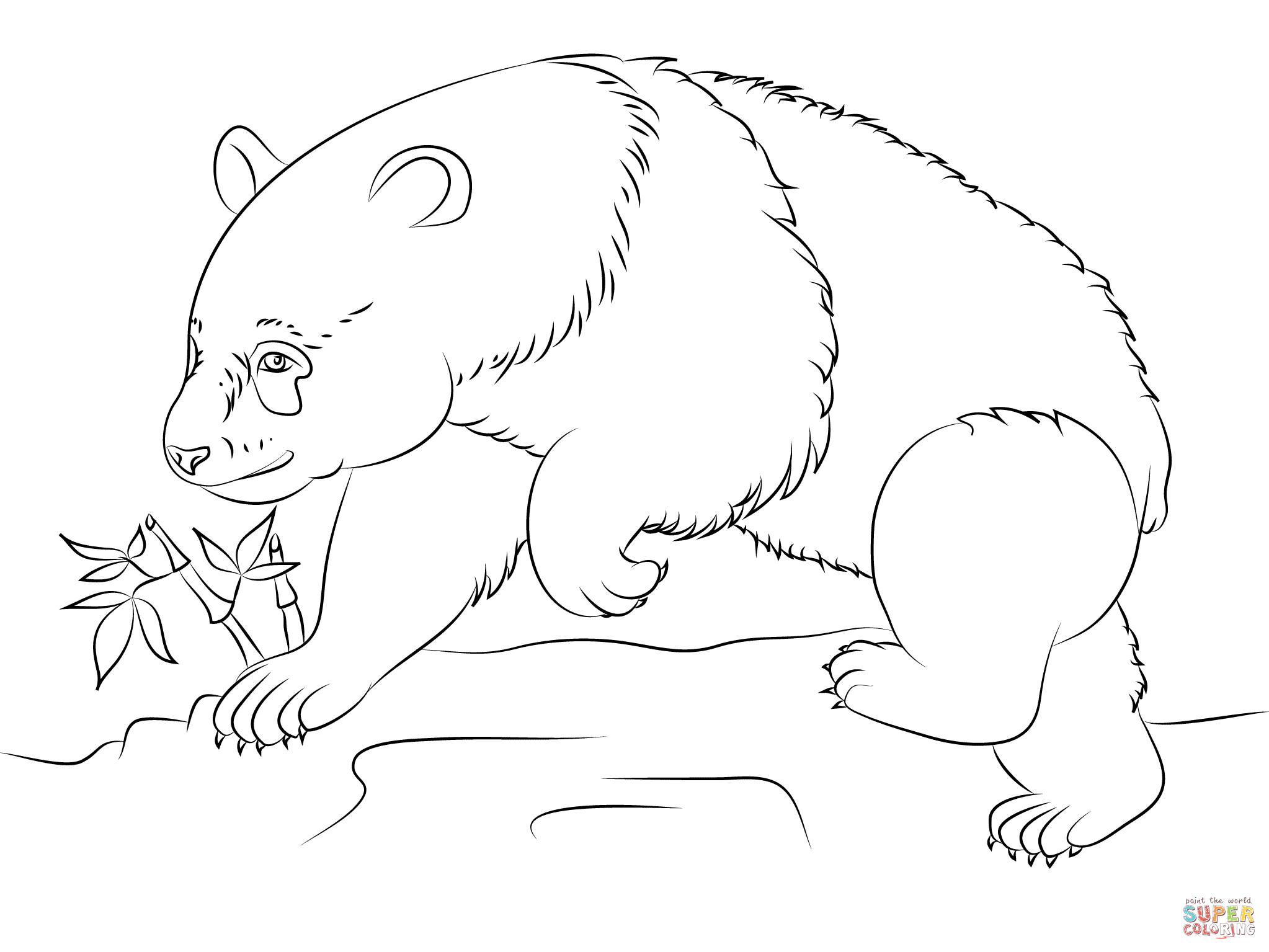 panda bears coloring pages google