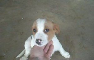 Adopt Willow On Petfinder Fluffy Puppies White Beagle Beagle Mix