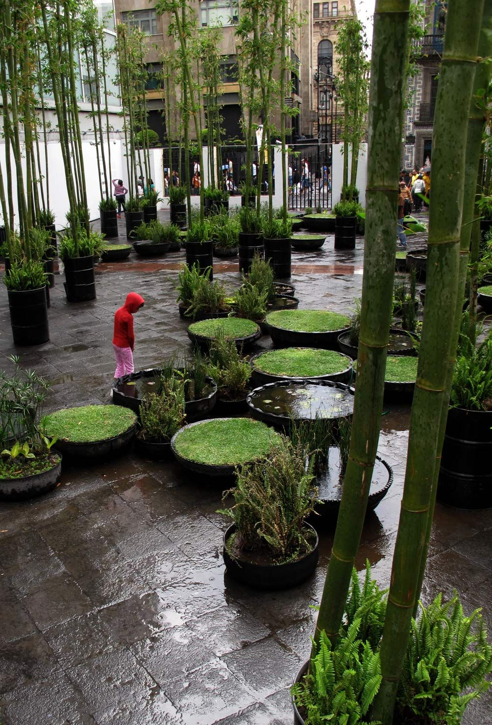 ecococos: aquí y ahora. jardín radial. ciudad de mexico, méxico. jeronimo hagerman