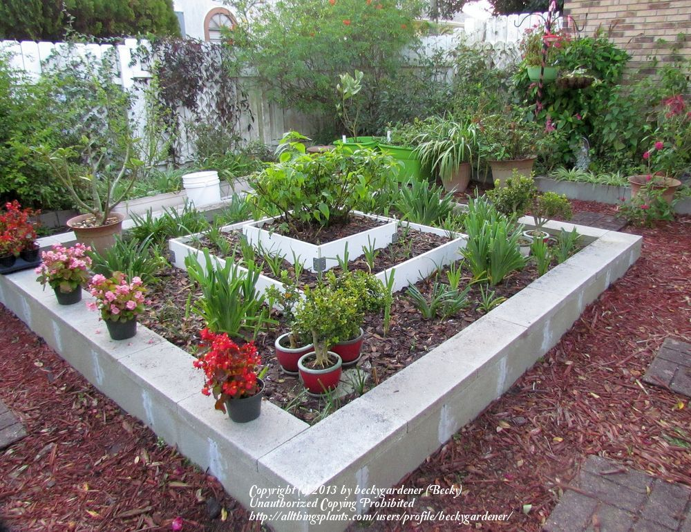 Simple Cinder Blocks Raised Garden Bed | Orange Blossoms ... |Cinder Block Flower Bed Plans