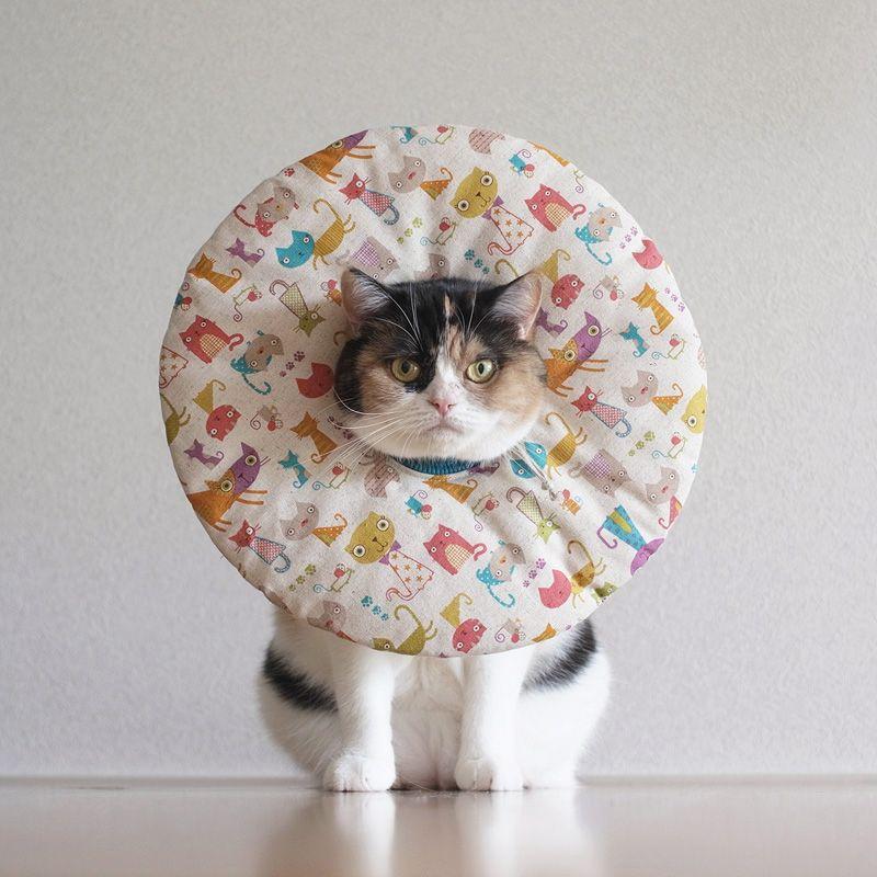 Hasil gambar untuk cute cone dogs and cats
