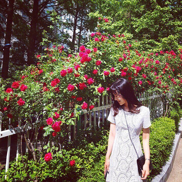 꽃이 많아 좋은 우리동네 !  #rose #may ##장미의계절 #여름 #햇살 #mine #decke #seoul by talktohanny