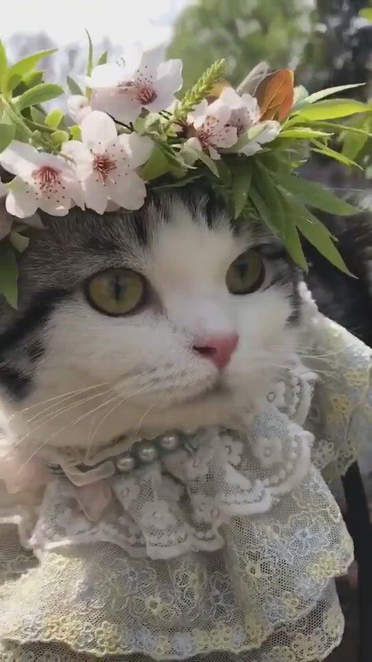 Cute Cat Videos Cat Painting Cat House Cat Wallpaper Iphone Video In 2021 Cute Cat Gif Cute Black Cats Cat Aesthetic