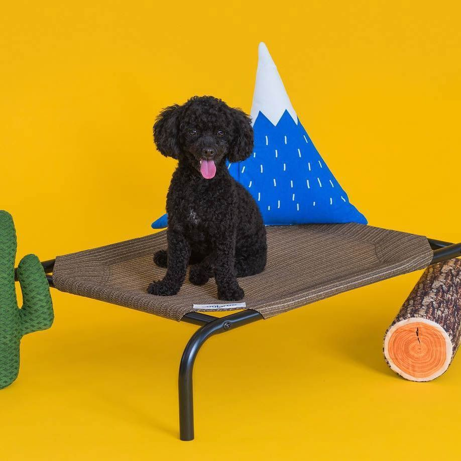 We present to you... Doggie Glamping 🏕 Made possible by