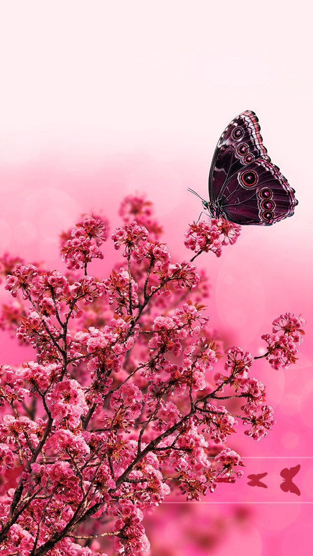 Tap And Get The Free App Lockscreens Art Creative Nature Flowers Butterfly Pink Red Hd Ipho Flower Iphone Wallpaper Pink Flowers Wallpaper Pretty Wallpapers