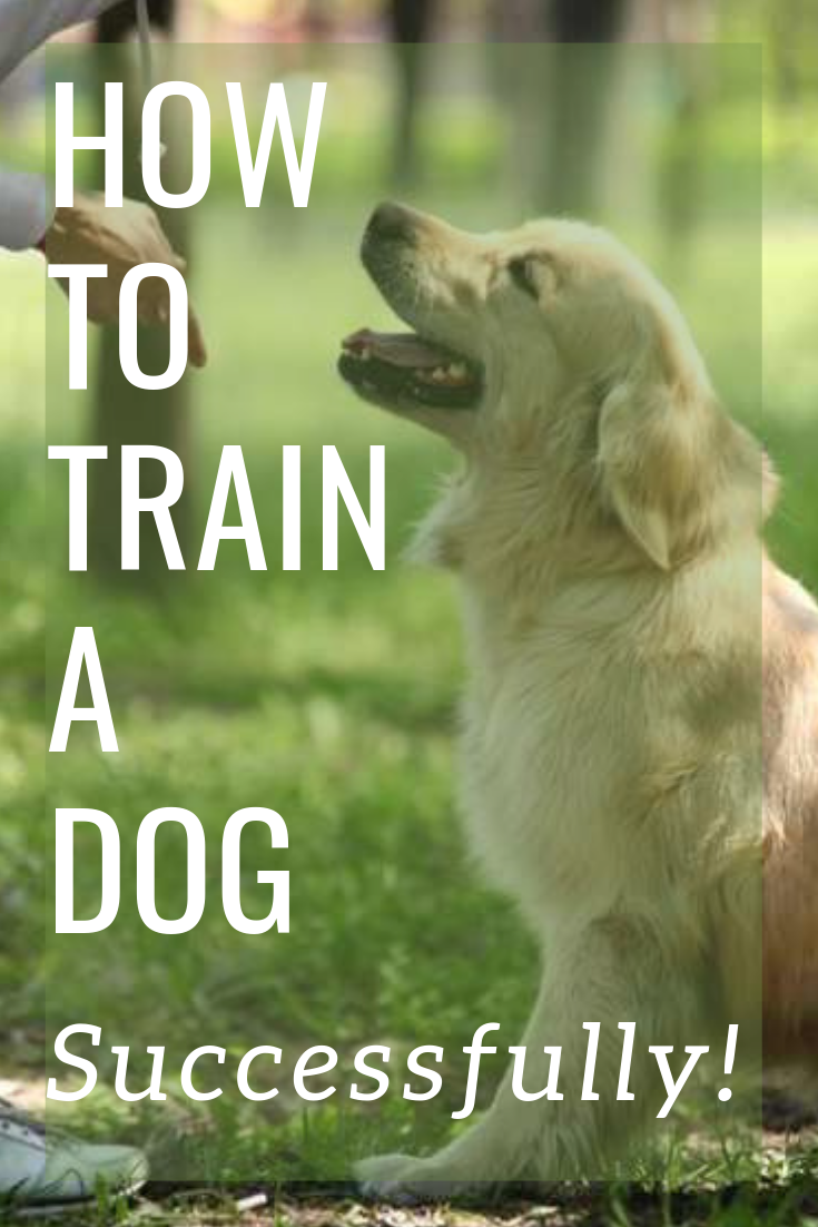 Ten Dog Training Tips To Help You Successfully Train Any Puppy Or Dog Whether You Are A First Tim Dog Training Methods Dog Training Tips Easiest Dogs To Train