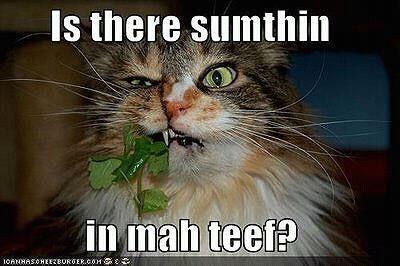 Pin By Erica Lynett On Kid Friendly Memes Funny Animal Pictures Funny Cat Pictures Funny Animals