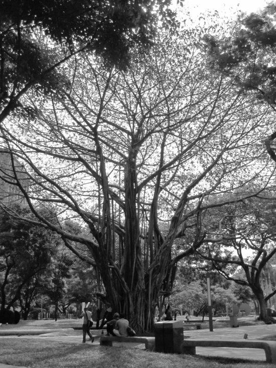 Ayala Triangle Gardens (Makati Through the Lenses event- 061910) -Philippines
