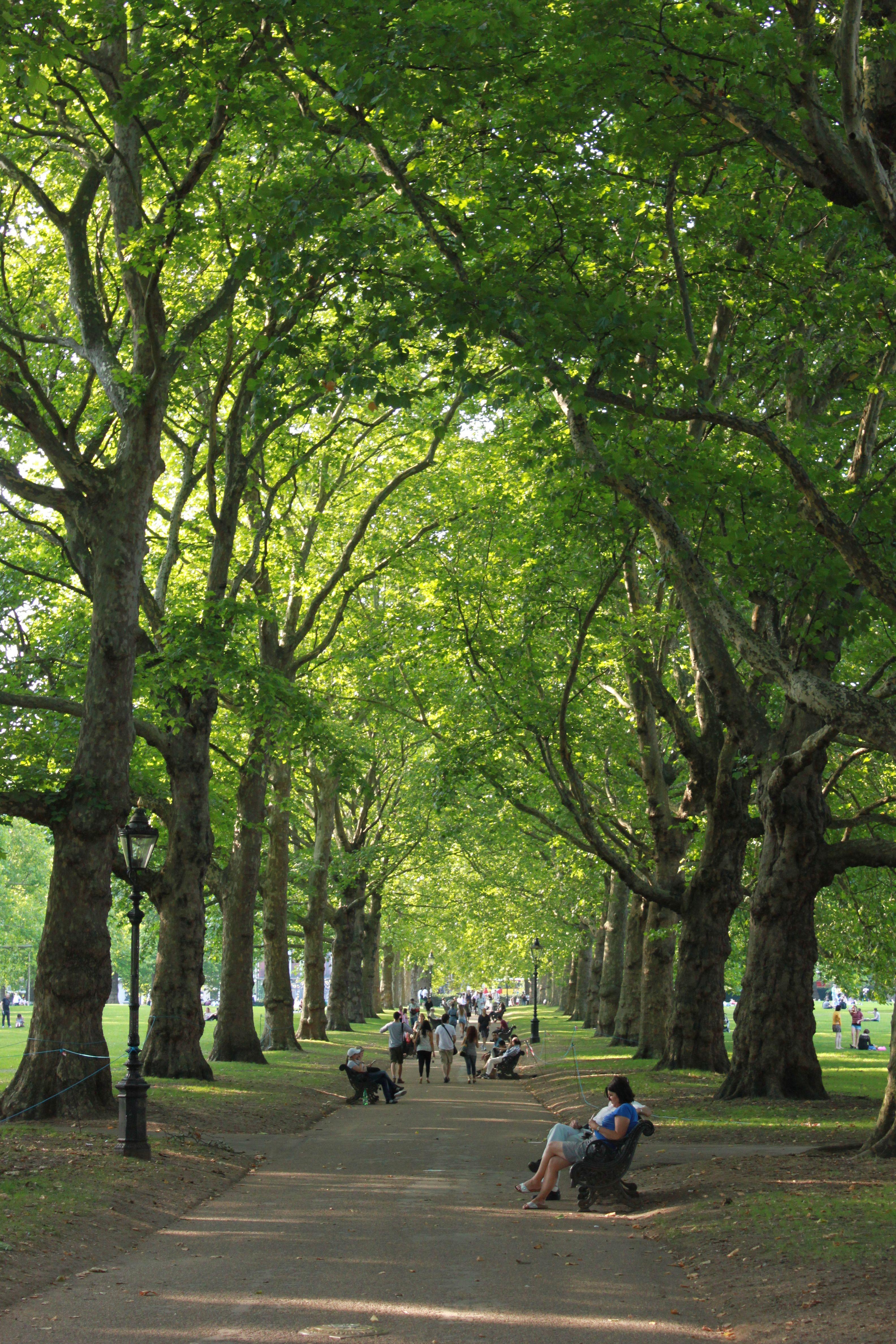 St James' Park, London....