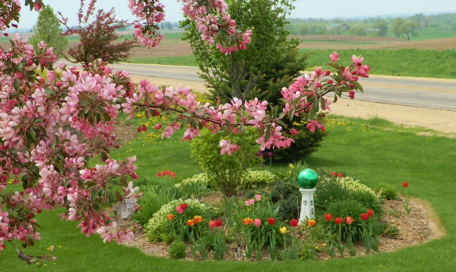 Idee Per Il Giardino Di Casa : Spring flowers. back yard ideas pinterest