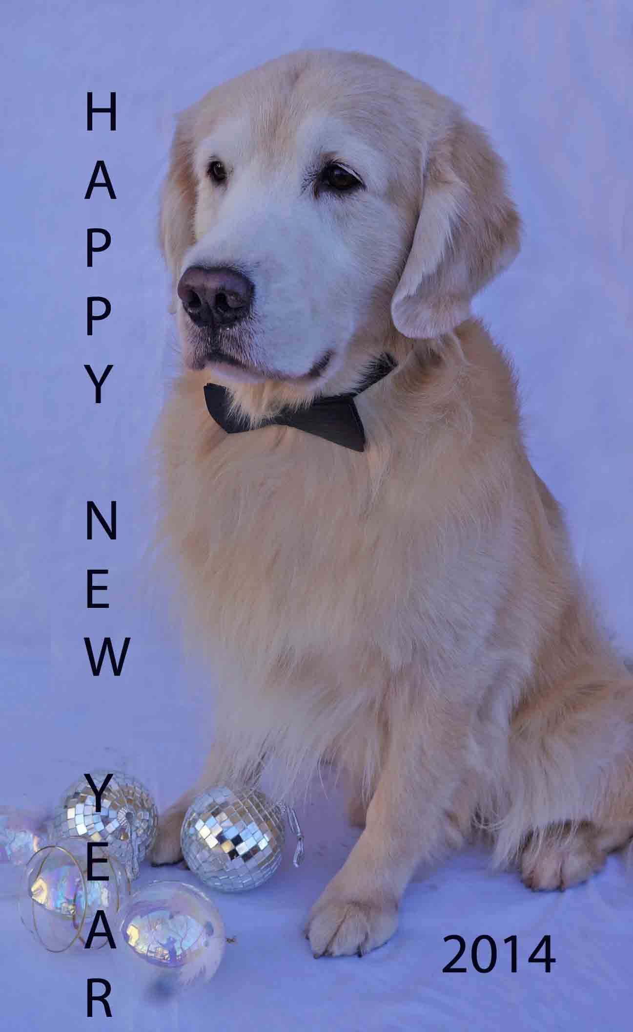 Happy New Year from Jack Golden Retriever