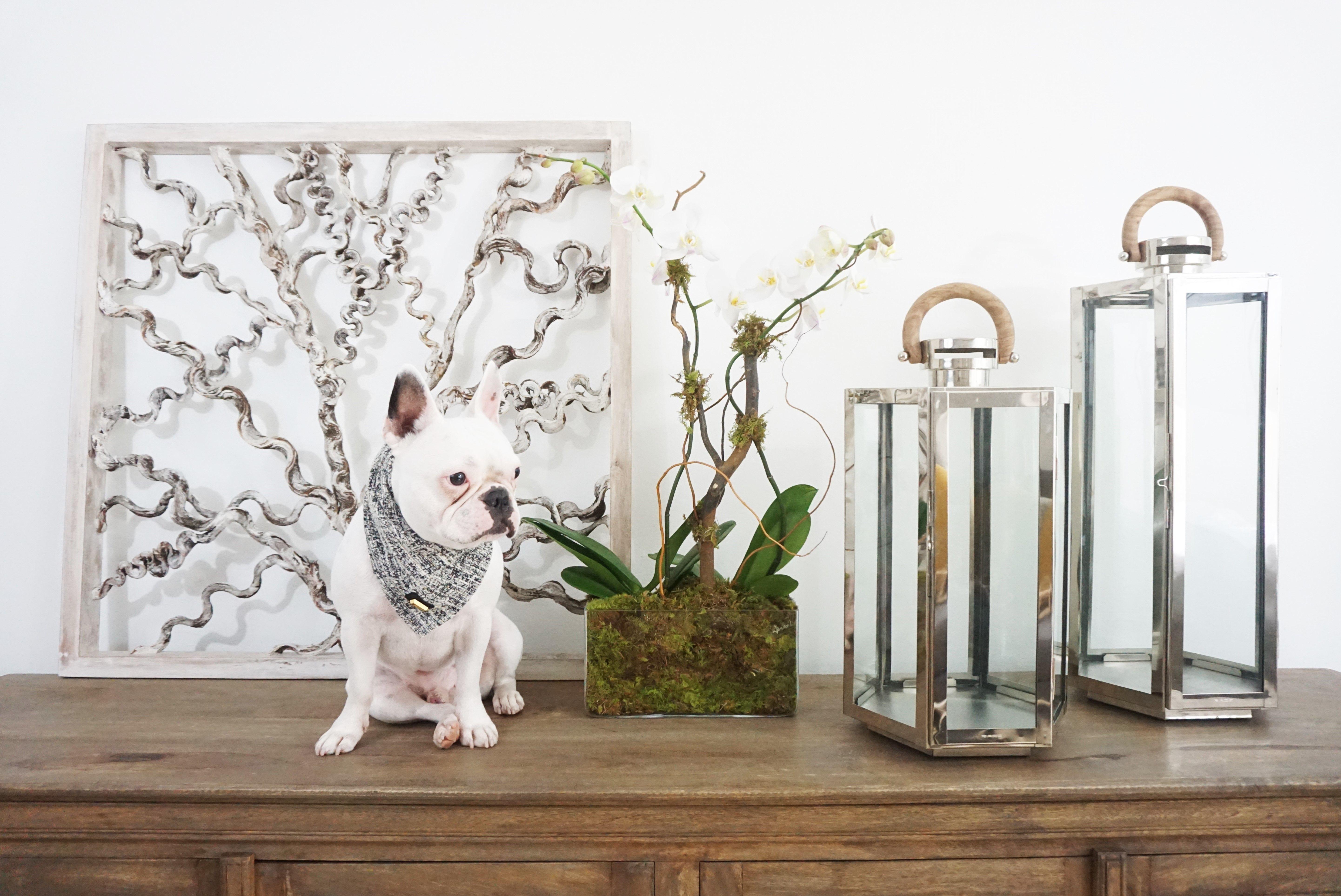 Dmaree Home - Interior Design - Home Decor - Lanterns