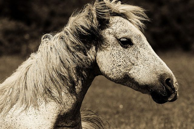 WIld Horse by R-W-P (Rupert in HK) on Flickr.