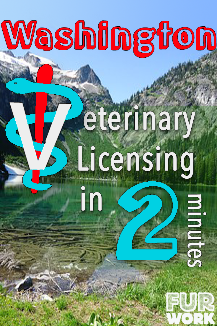 Washington State Veterinary Licensing in 2 Minutes