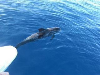Dolphin Watching #Tenerife