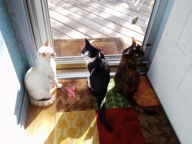 Cat's Pride Fresh and Light Litter #FreshandLight #Sponsored