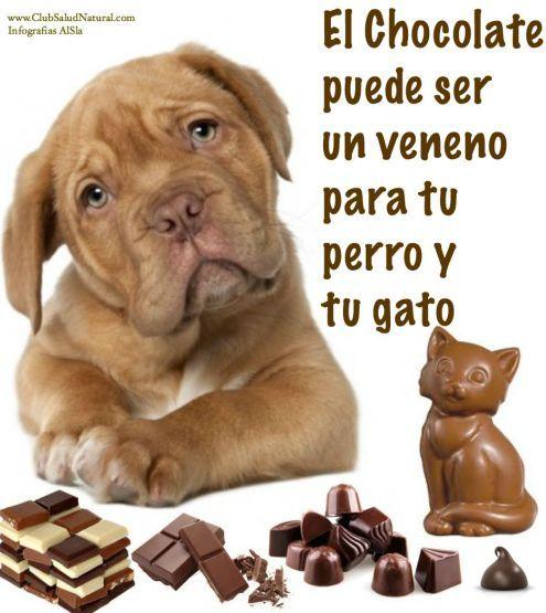 Por qué el Chocolate puede Matar a tu Perro o Gato - Club Salud Natural
