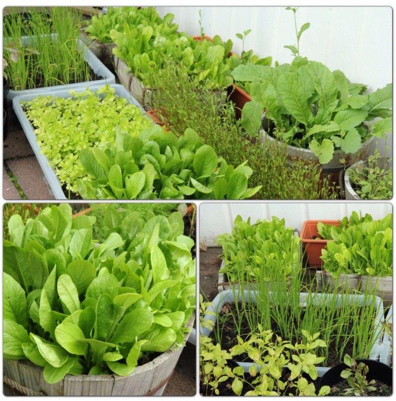 นักออกแบบชาวบราซิลได้ช่วยหาทางออกให้กับครอบครัวเล็กๆ ในชุมชน  ที่บ้านหลังเล็กๆ ไม่มีบริเวณมากนักสำหรับการทำสวน แต่อยากได้พื้นที่สำหรับปลูก พืชผักสวนครัว ...
