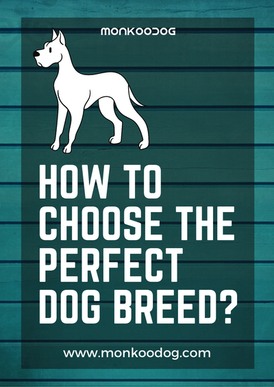 4 Things You Must Be Missing Out While Choosing The Perfect Dog