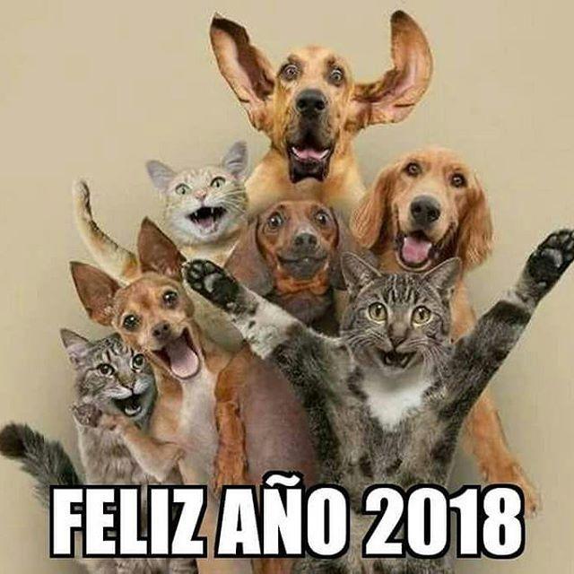Feliz 2018 Vegan Govegan Vegano Veganismo Cute Animals Funny Animal Pictures Cat Lovers