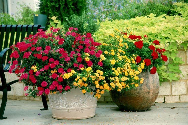 Vasi Da Giardino Grandi.Piante Da Giardino In Grandi Vasi Donatella Walter