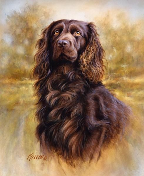 Boykin, Brittany and Springer Spaniels Painted by Jim Killen 15