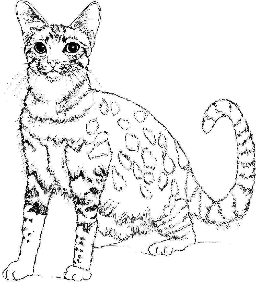 Katzen Ausmalbilder Schwer : Le Chat De Jolies Coloriages Hayvan Pinterest