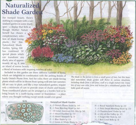 Shade Garden plan | Shade garden plants, Garden planning