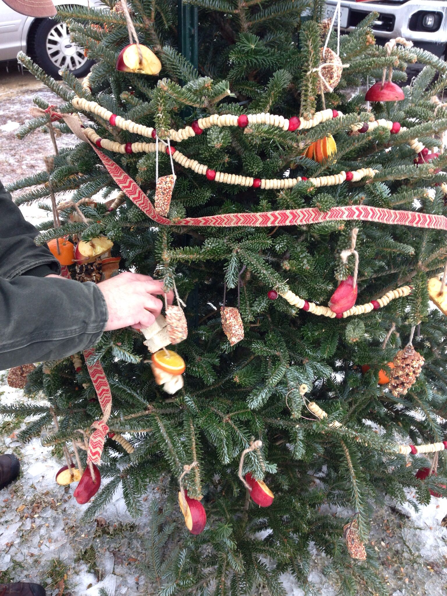 Our New Tradition A Bird Tree Put Used Christmas Tree Outside Or Use Impe Outdoor Christmas Tree Outdoor Christmas Tree Decorations Outdoor Christmas Garland
