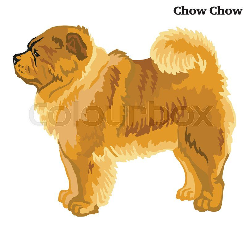 Portrait Of Standing In Profile Chow Chow Dog Vector Colorful