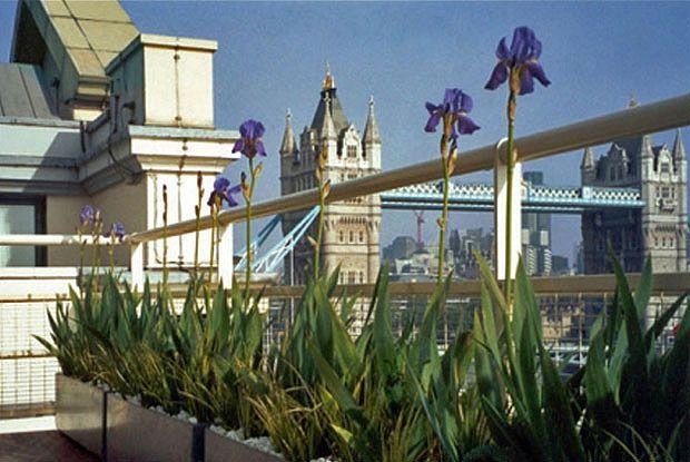Balcony Garden Overlooking Tower Bridge London Border Planters With Glass Rail