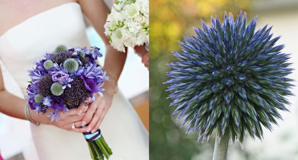 Unique Wedding Flowers to Make Your Bouquet Stand Out   Scabiosa ...