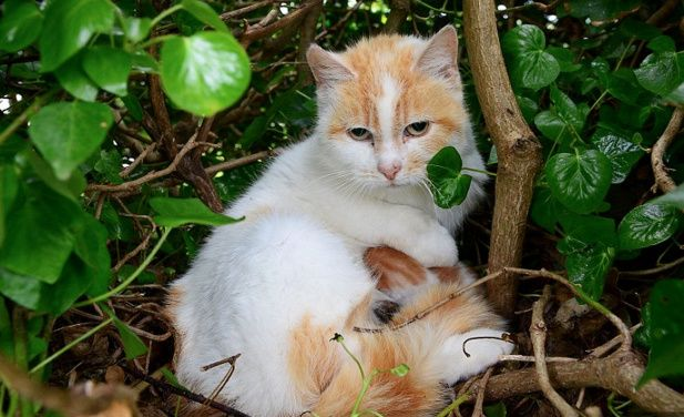 Cat Gives Birth to Kittens in a Bird's Nest