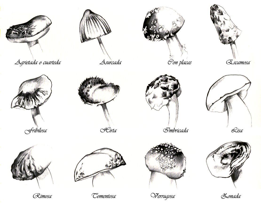 Kingdom Fungi Coloring Worksheet