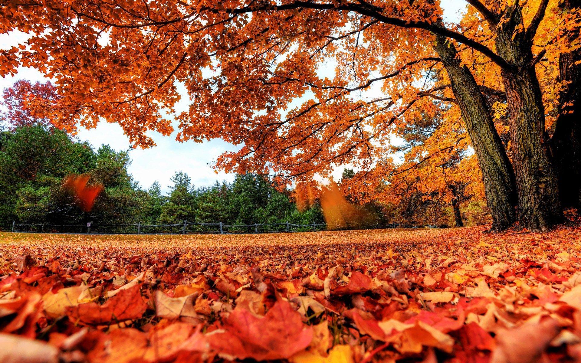 Fall Leaves Desktop Wallpapers Ololoshenka Pinterest Autumn