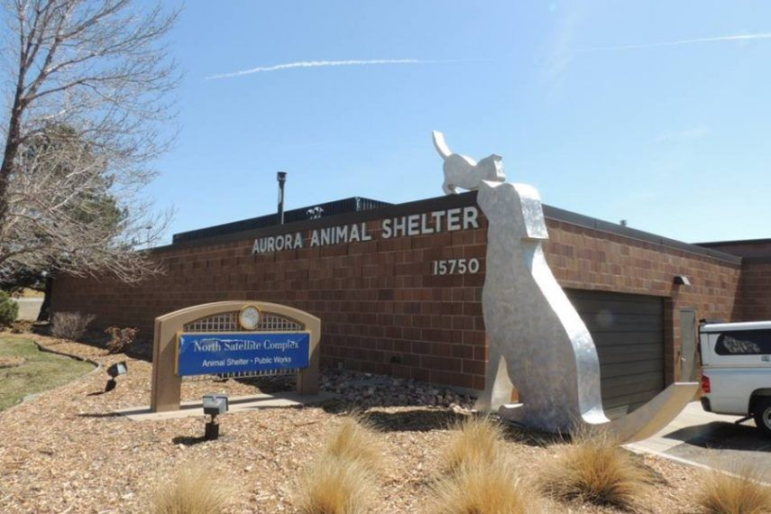 Aurora Animal Shelter Your Metro Denver Animal Shelter Colorado Image Colorado